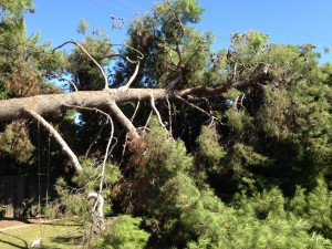 Tree removal becomes necessary when a large tree fails