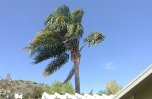 Orange County Palm Tree Removal