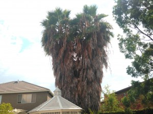 Orange County Palm Tree Trimming